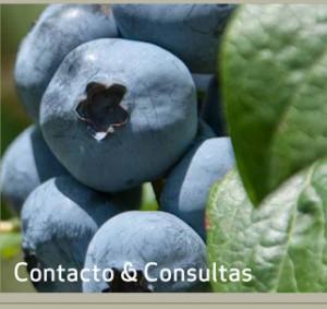 web_patagonia_esp